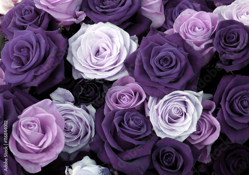 Różne kolory róż