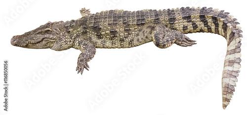 Autocollant pour porte Crocodile crocodile big
