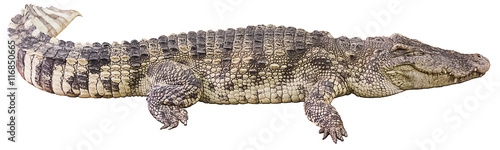 Deurstickers Krokodil crocodile big