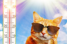 Hot Day For A Cat