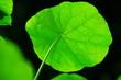 canvas print picture - Blätter und Blüten