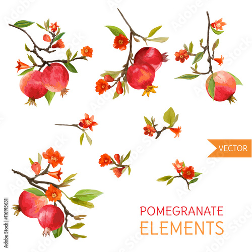Vintage Pomegranates, Flowers and Leaves. Watercolor Style Fruits