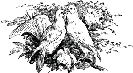 Fototapeta Vintage clipart pigeon
