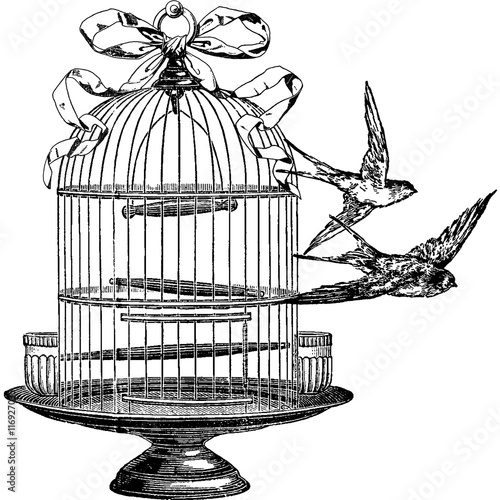 Photo  Vintage image swallow, birdcage
