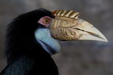 Yellow Billed Hornbill Great Hornbill, Great Indian Hornbill, Great Pied Hornbill, Hornbill