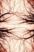 Abstract Tree Branches Spooky ...