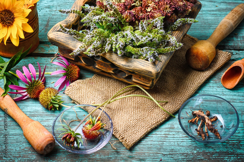 Photo  Harvest of medicinal plants