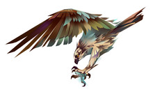 Dive Hawk Isolated
