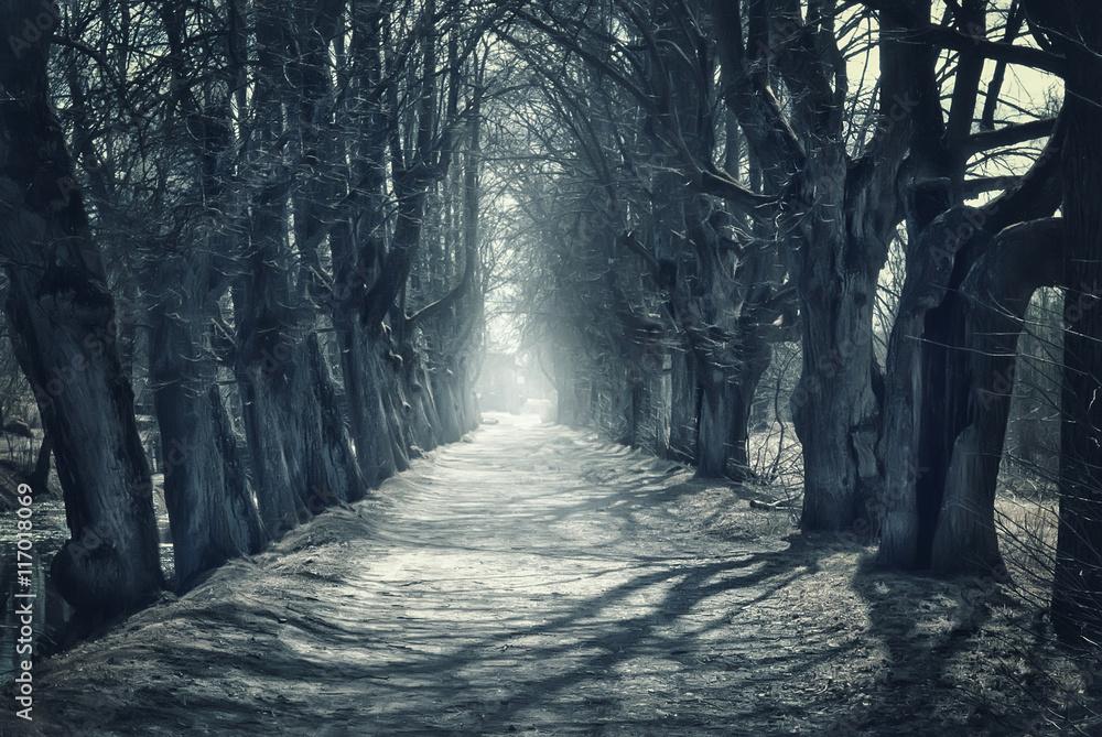 Fototapeta Halloween mystical background with dark forest