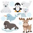 Arctic animal vector illustration
