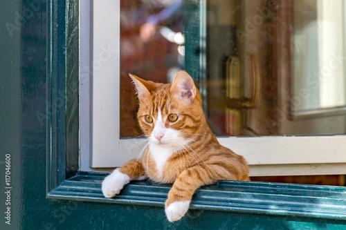 Fotografie, Obraz  ドアから覗く猫