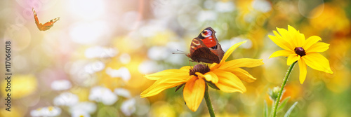 Summer, Flowers, Butterflies (Aglais io)