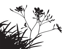 Set Of Flower Trees Vector Silhouette, Black Shadow Grass Shape Isolated On White, Thin Twig Plant