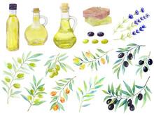 Watercolor Set Of Floral Elements.