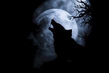 Silhouette  Wolf Howling At Moon .