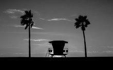 Lifeguard Tower In Black And White - The Lifeguard Tower And Palm Tree On The Beach In Monochrome