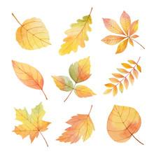 Watercolor Set Autumn Leaves O...