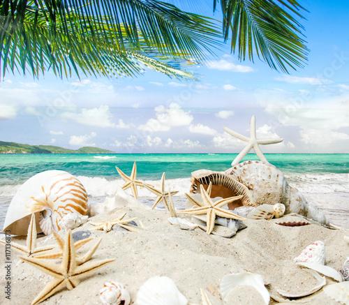 Foto op Plexiglas Caraïben Glück, Freude, Reisen, Urlaub, Auszeit: Traumurlaub an einem einsamen Strand in der Karibik mit Meer, Himmel, Palmen, Sand, Muscheln und Seesterne :)