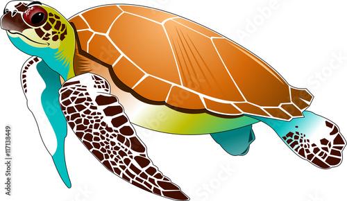 sea turtle Slika na platnu