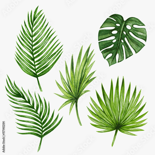 Fotografie, Obraz  Watercolor tropical palm leaves. Vector illustration.