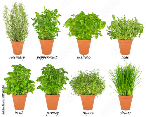 collection set of herbs in pots Reihe von Küchenkräuter