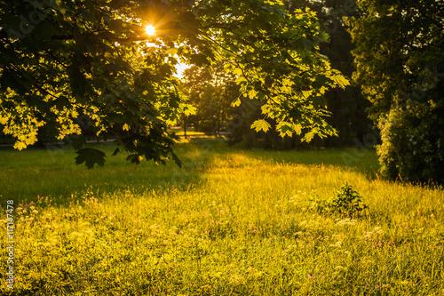 Fototapeta Park in evening sunlight obraz na płótnie