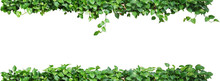 Heart Shaped Green Leaves Vine Plant, Devil's Ivy Or Golden Pothos Nature Frame Layout Isolated On White Background With Clipping Path.
