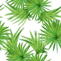 fototapeta tło z liści palm