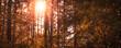 Herbst im Wald, Sonnenschein und Insta Style Bearbeitung, Panora