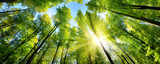 Fototapeta Las - Zauberhafter Sonnenschein auf grünen Baumkronen im Wald