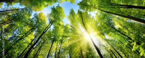 Poster de jardin Arbre Zauberhafter Sonnenschein auf grünen Baumkronen im Wald