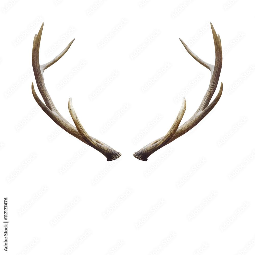 Fototapeta deer horns.