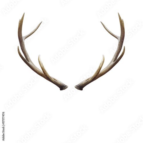 Tablou Canvas deer horns.