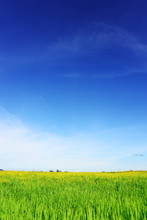 Nature Green Field With Blue S...