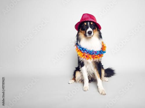Keuken foto achterwand Kat cooler hippie hund