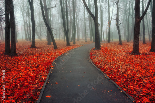 Autumn foggy alley - colorful autumn landscape view
