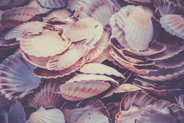Fototapeta samoprzylepna Scallop shells heap