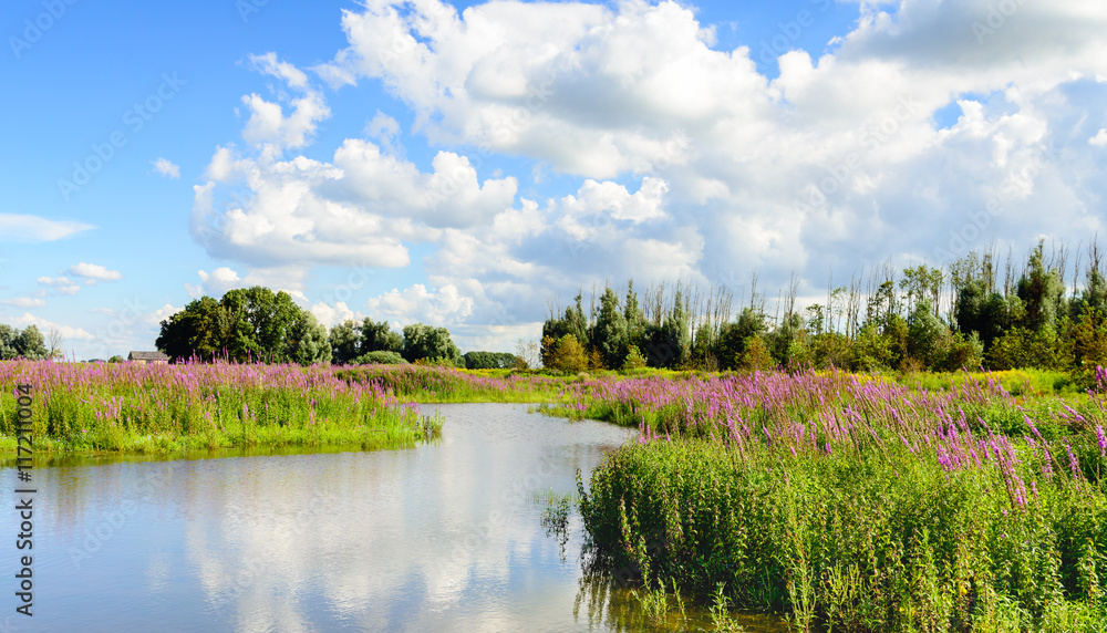 Fototapety, obrazy: Colorful Dutch nature reserve in summertime