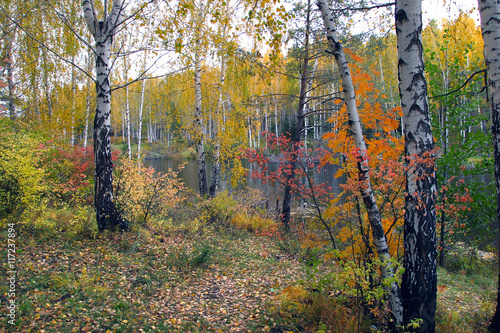 Poster Berkbosje Autumn Landscape