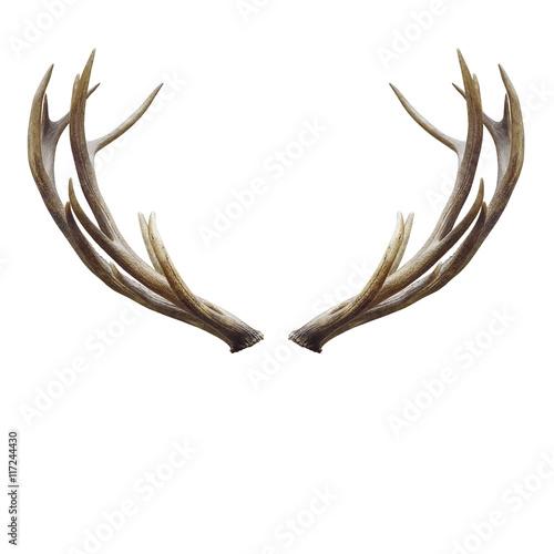 Valokuva deer horns.