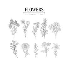 Flower Herbarium Hand Drawn Re...