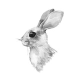 Cute rabbit. Watercolor illustration. Black and white bunny - 117260654
