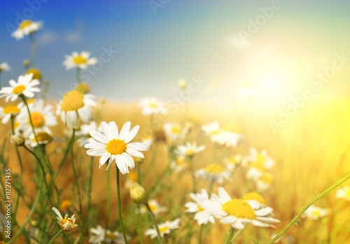 Tuinposter Zwavel geel Summer wildflowers