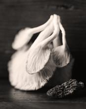 Black And White Close Up Image Of Mushroom