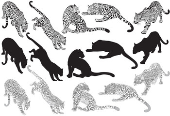 FototapetaSet of leopard on a white background