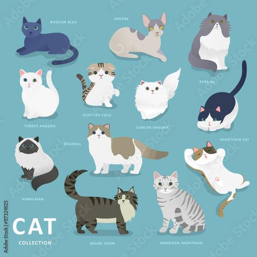 Valokuvatapetti Adorable cat breeds collection
