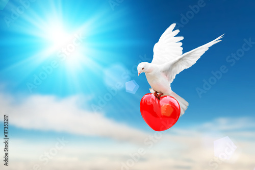 Canvas Print - white dove holding red heart