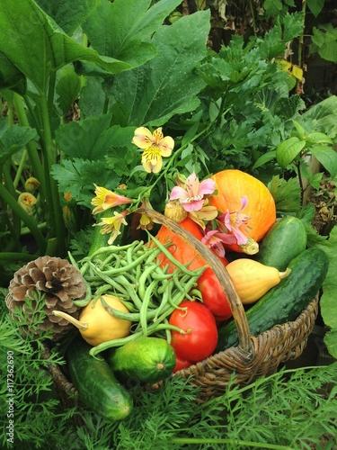 Panier De Legumes Bio Au Jardin Potager Buy This Stock Photo And