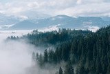 Mountain landscape with fir forest and fog - 117364050