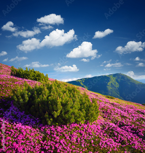 Foto op Aluminium Nachtblauw Summer mountain landscape with flowers on a sunny day
